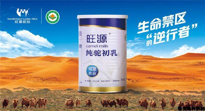 驼初乳,小骆驼嘴里抢来的奶