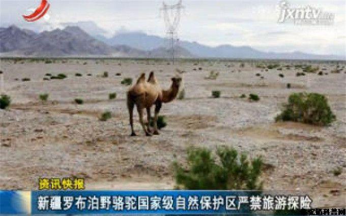 骆驼能在怎样恶劣的环境中生存?
